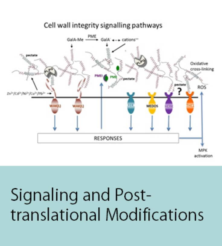 Signaling and Post-translational Modifications